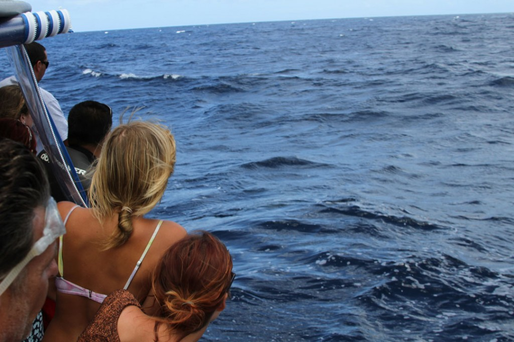 North_shore_shark_cage_tours_backpackers