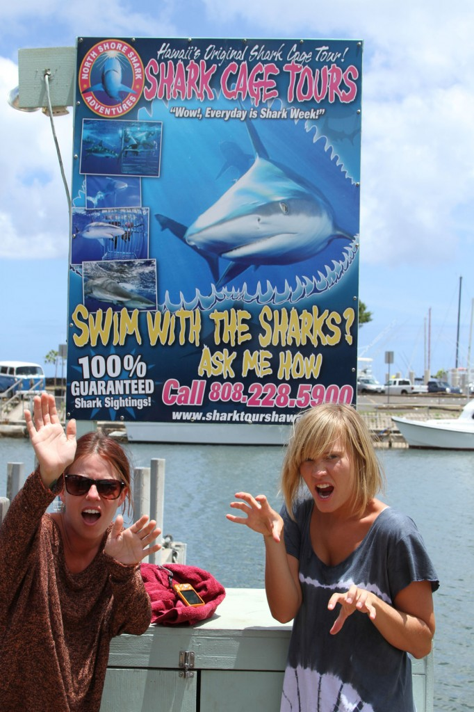 Shark_cage_tours_haleiwa_north_shore_backpackers