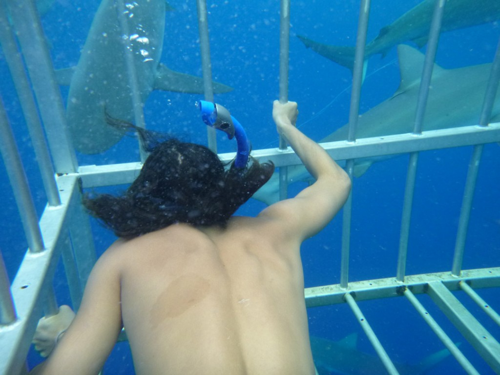 conner_wagner_north_shore_shark_adventures_haleiwa_backpackers